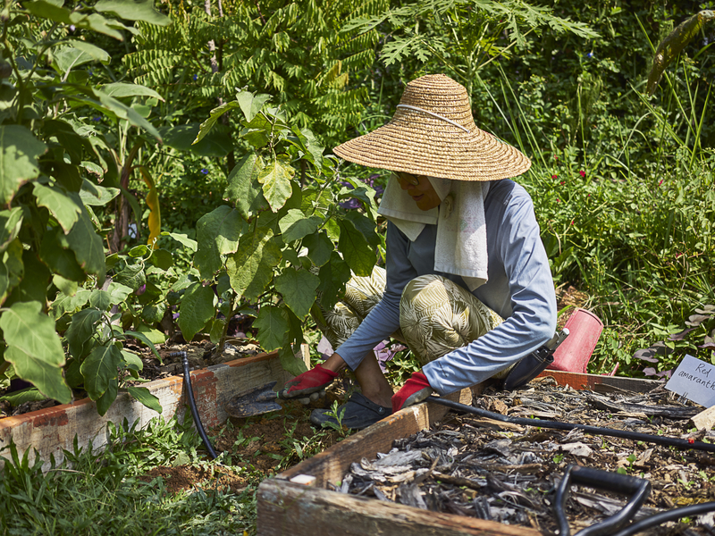 lady do a farming activity