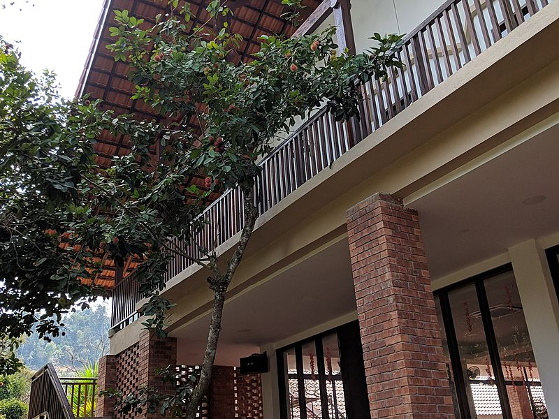 second floors villa with large windows and trees surrounds
