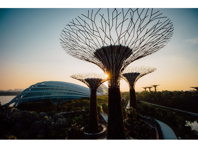 25 and 50 metres of garden by the bay's supertrees