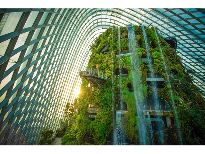 world's tallest indoor waterfall at cloud forest by gardens by the bay