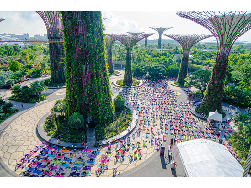yoga events at supertree observatory area