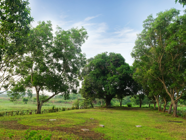 spacious landscape with a lot of trees