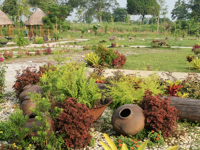 garden area with so many plants and trees